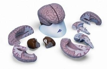 Brain, 8 Part
