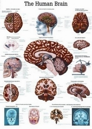 Poster - The Brain